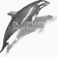Glass Tile for Decorative Facing: Dolphin 2